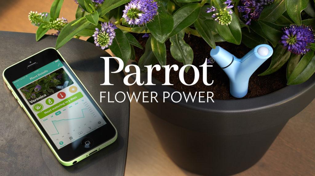 parro-flower-power