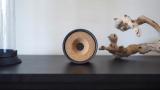 Obi, un jouet connecté pour animaux de compagnie